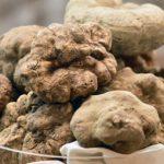 Truffle gastronomic delicacy – San Miniato Truffle Festival